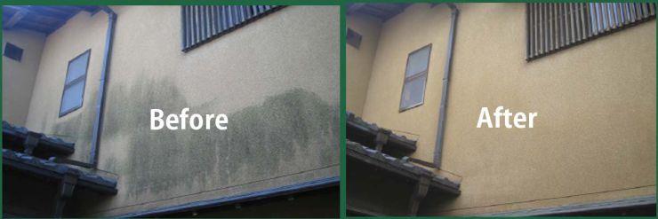 カビ汚れ・カビ除去の業務用洗剤 洗浄マジック